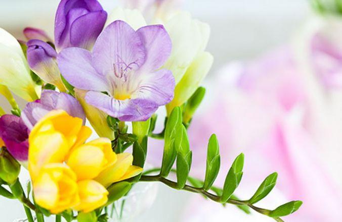 Вариант фотопечати: Цветы R044