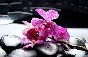 Фотопечать камушки и розовая орхидея